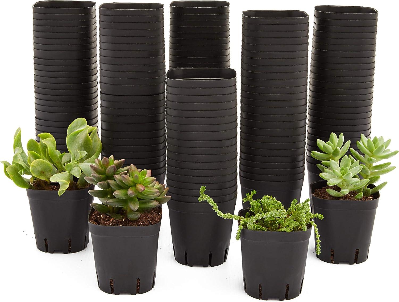 Square Nursery Plastic Flower Pots for Plants, Seedlings (2.6 in, 150 Pack): Garden & Outdoor