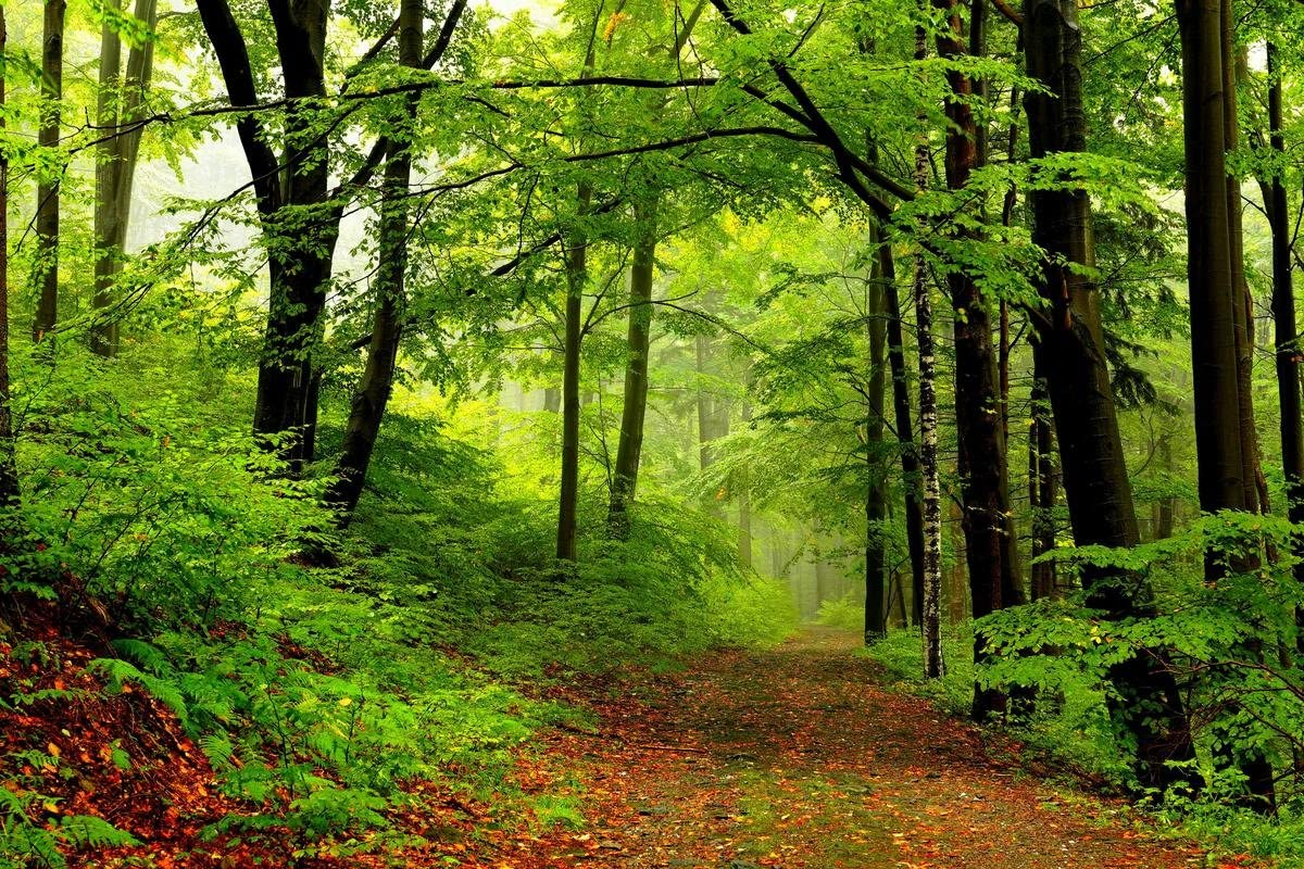Gifts Delight Laminated 36x24 Poster: Nature, Spring, Forest, Park, Trees, Road, Path, Walk, Nature, Trees s Nature