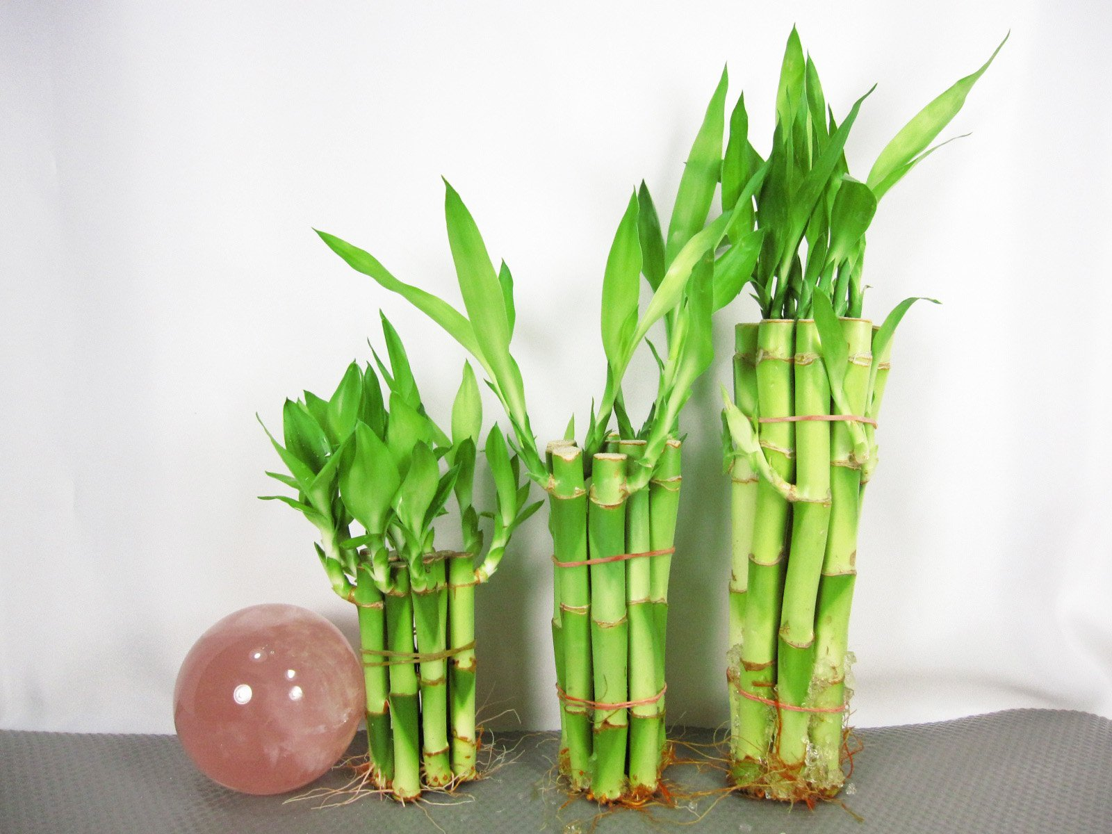 9GreenBox: Lucky Bamboo - Set 4''x10, 6''x10, 8''x10