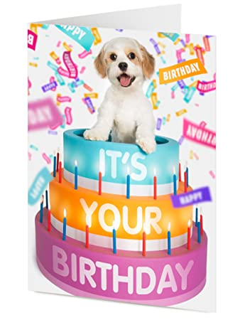 ITS YOUR BIRTHDAY cute Cavalier King Charles x Bichon Frise