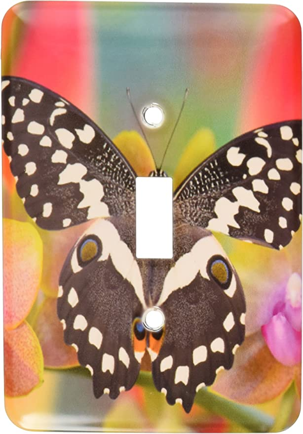 3drose Lsp 95475 1 Tropical Butterfly Orchard Swallowtail From Africa Single Toggle Switch Multicolor Switch Plates Amazon Com