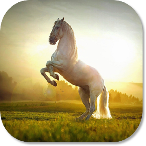 Amazon Horse HD Wallpapers Appstore For Android
