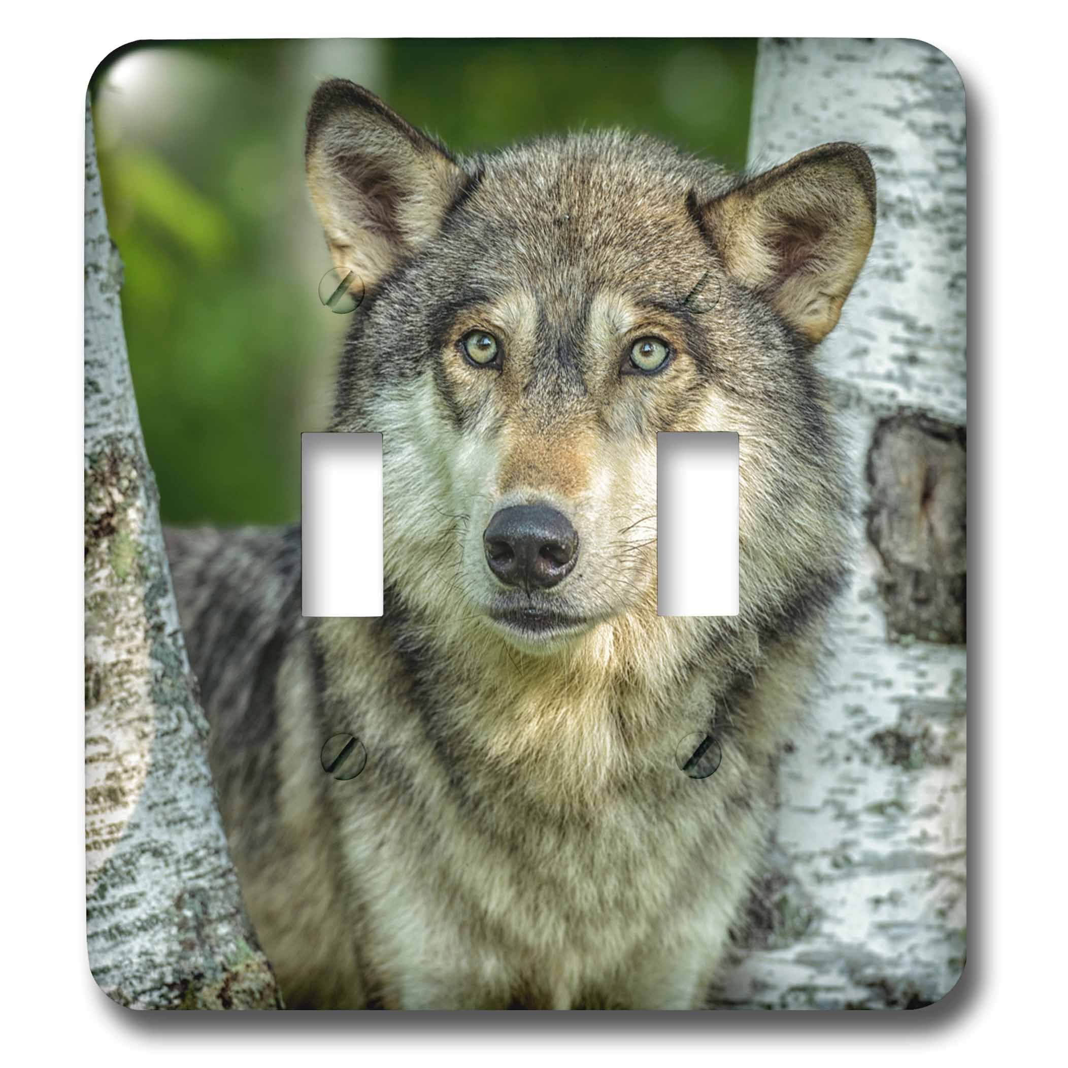 3dRose LSP_231047_2 USA, Minnesota. Close-Up of Grey Wolf Between Two Birch Trees Toggle Switch, Multicolor by 3dRose