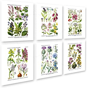 Botanical Prints Wall Art Wildflowers Art Set of 6 Unframed Art Prints
