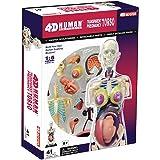 Famemaster 4D-Vision Transparent Pregnancy Torso Anatomy Model