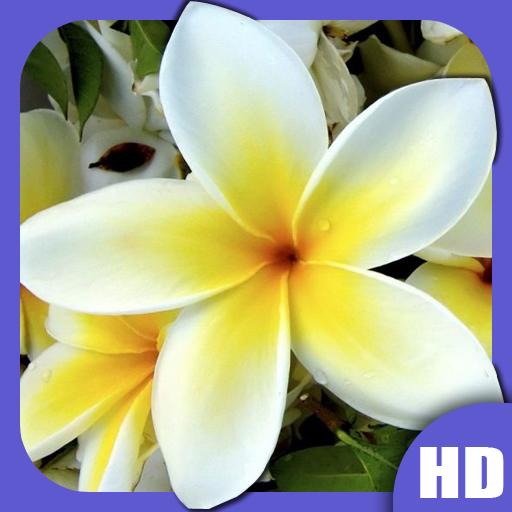 Flowers HD Wallpapers