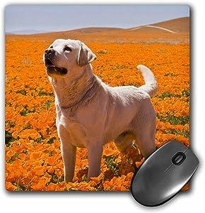 Yellow Labrador Retriever dog, California - US05 ZMU0340 - Mouse Pad, 8 by 8 inches (mp_143009_1)