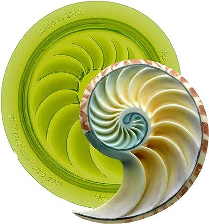 Nautilus Shell Focal