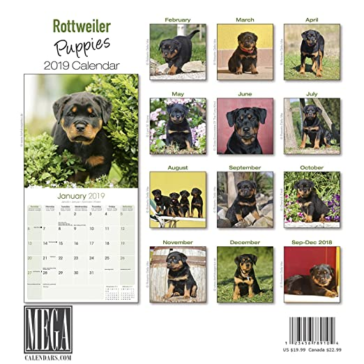 Amazoncom Rottweiler Puppies Calendar 2019 Dog Breed Calendar