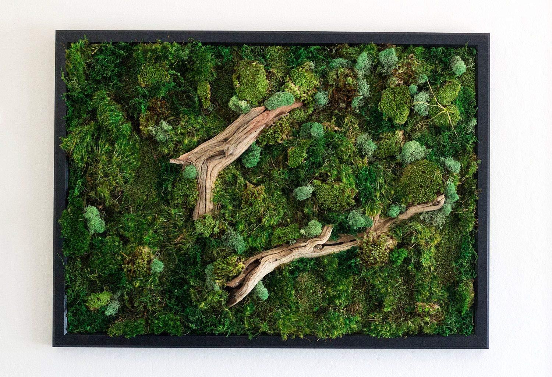 Chartreuse 2.5oz BirchForest Reindeer Moss Preserved Floral Moss