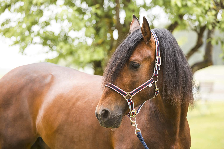 Testiera per Cavallo Collezione Primavera-Estate 2017 Covalliero