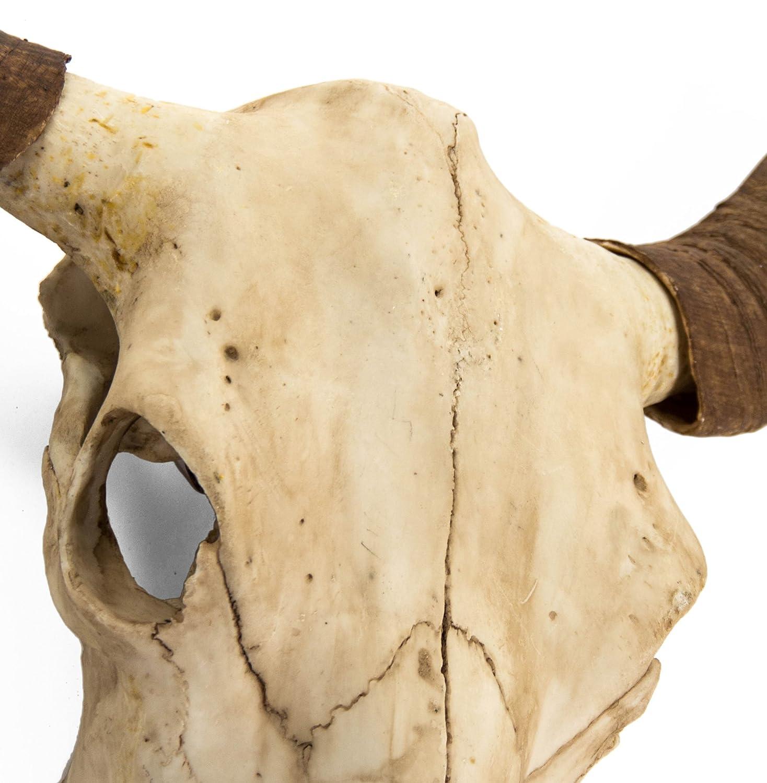 Amazon.com: Toro Rustic Lodge Bull Head Skull Reproduction Wall ...