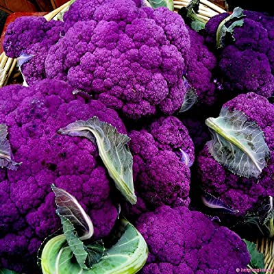100 Purple Broccoli Seeds, Purple Sprouting Broccoli, Heirloom Non-GMO Seeds, 100ct : Garden & Outdoor