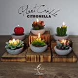 Amazon Price History for:DarkSteve Decorative Plant Citronella Candle Collection - 6 pcs | Cactus Candles | Succulent Candles for Home Decor