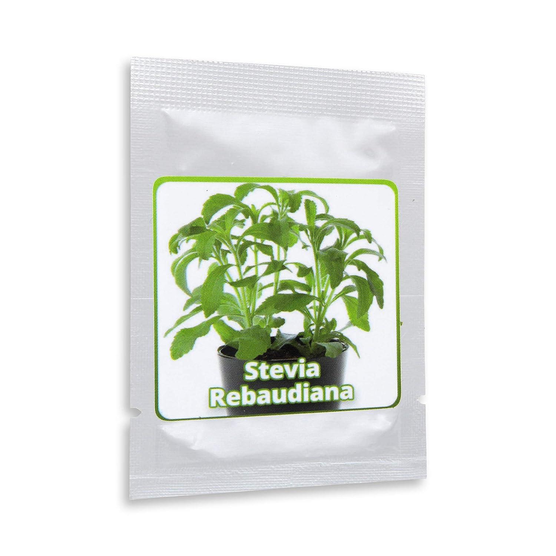 Stevia rebaudiana - ca.100 semillas por paquete - Sustituto de azúcar natural sin calorías: Amazon.es: Jardín