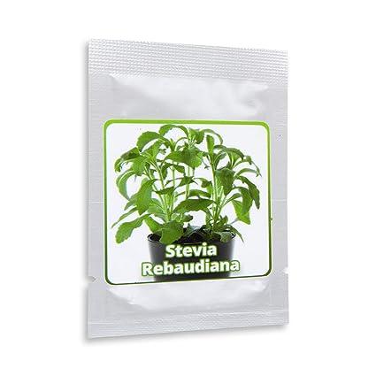 Stevia rebaudiana - ca.100 semillas por paquete - Sustituto de azúcar natural sin calorías