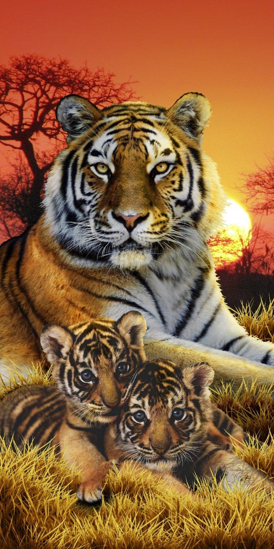 Tigre de Bengala (vida de Pi familia es de extrañar Wildlife toalla de playa (6836: Amazon.es: Hogar