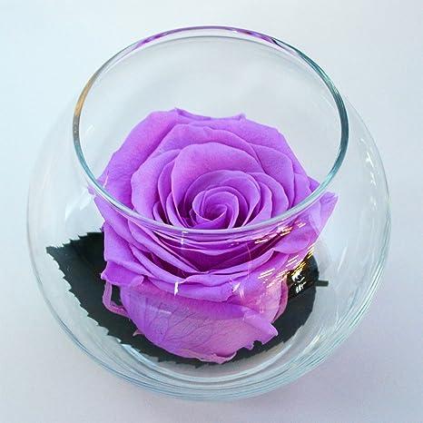 53d64e4965d0 Amazon.com   Luxe Bloom Single Lasting Luxury Rose - Orchid   Garden ...
