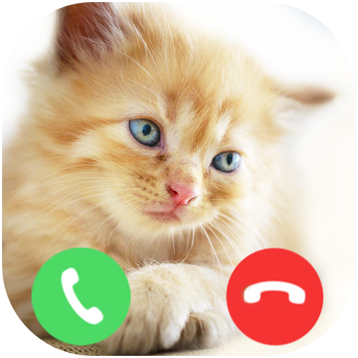 Fake Call From Kitten Cat (Picture Novelty)