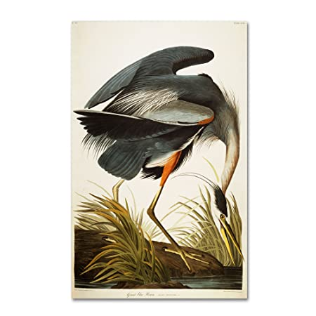 Great Blue Heron Artwork by John James Audubon, 30 by 47-Inch Canvas Wall Art