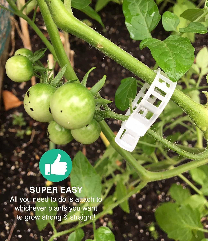 300 Durable Recortar Clips jardín enrejado Clips, Ideal para ...