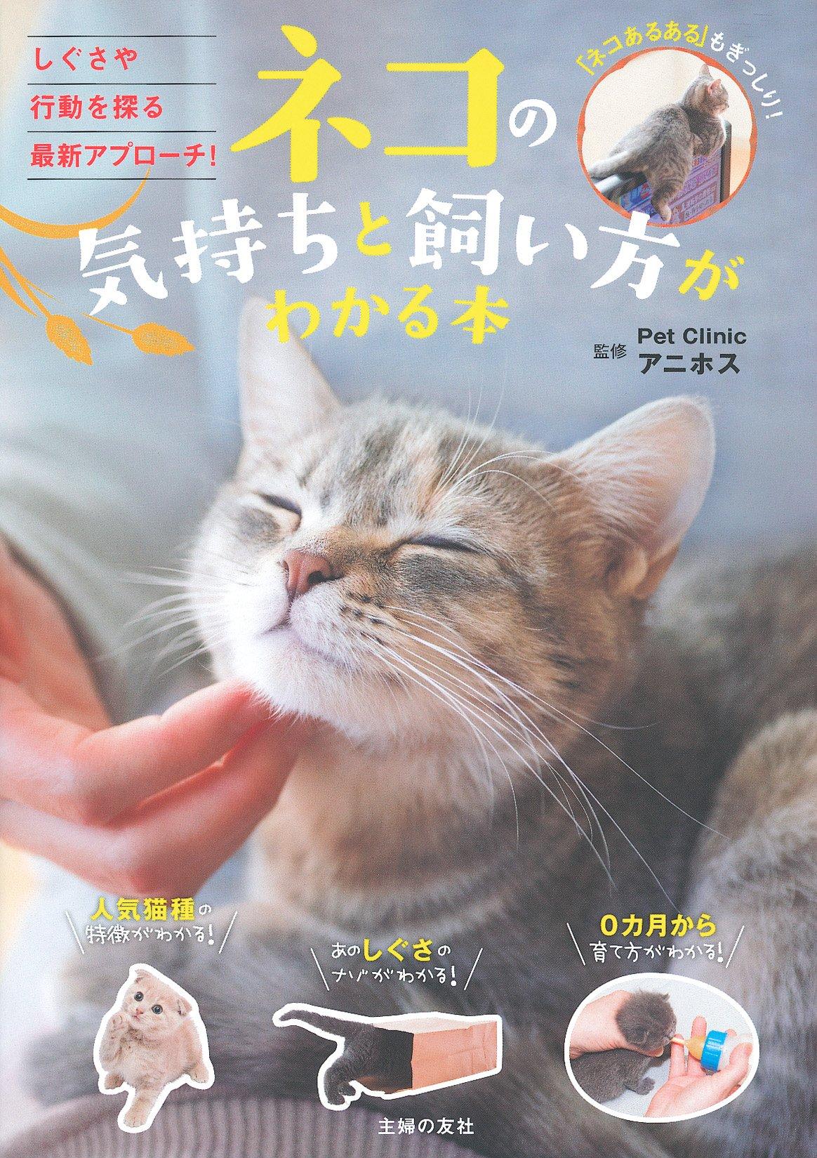 初めて 子猫 飼い 方