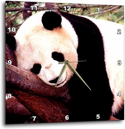 3dRose DPP_515_1 Panda Bear-Wall Clock, 10-inch, Multicolor