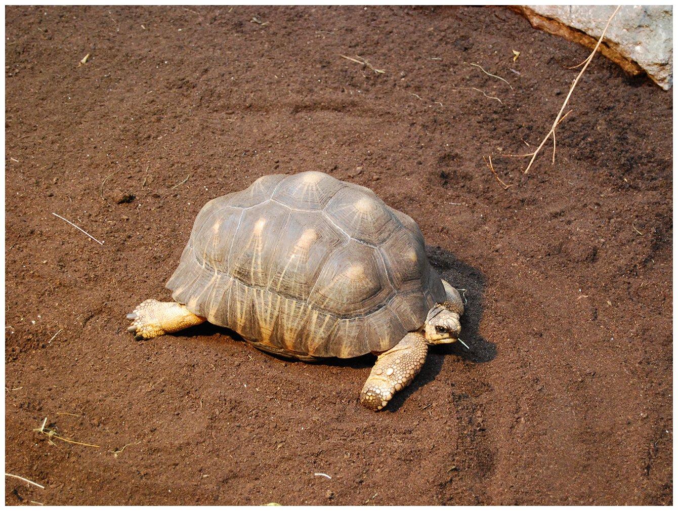 Kleiner Kühlschrank Für Schildkröten : Floragard schildkrötensubstrat l natürliche einstreu ohne