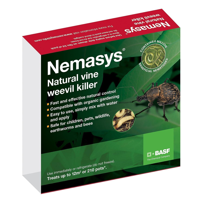 Leather jacket killer b&q - Nemasys Vine Weevil Killer Standard Pack Amazon Co Uk Garden Outdoors
