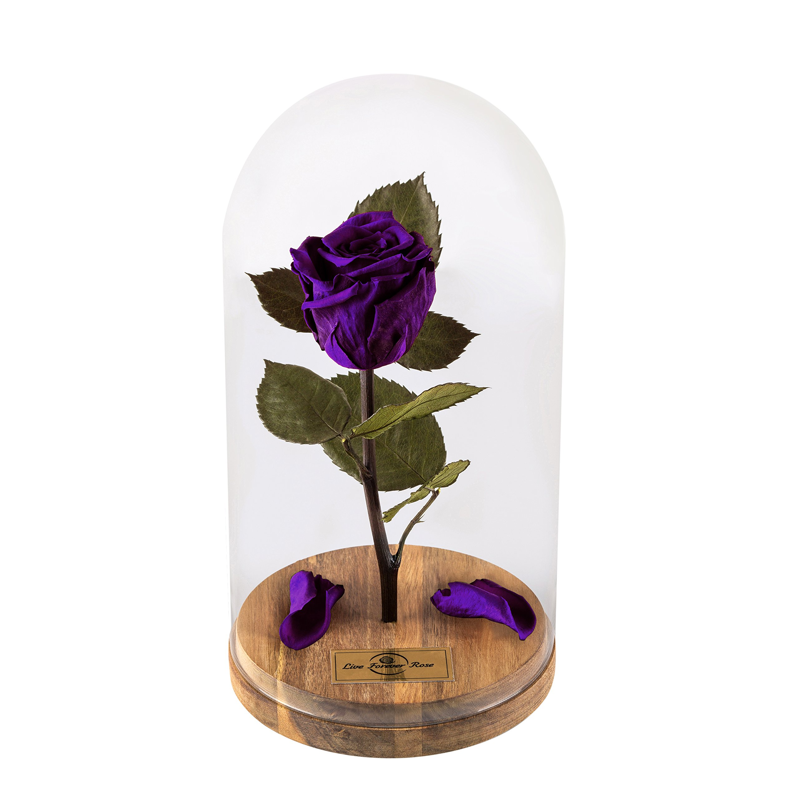 Beauty And The Beast Rose, Live Forever Rose with fallen petals in Glass Dome - Disney home decor Rose, Preserved Rose 100% Natural LFR0002 (Purple) This is a Real Rose!, mothers day gifts
