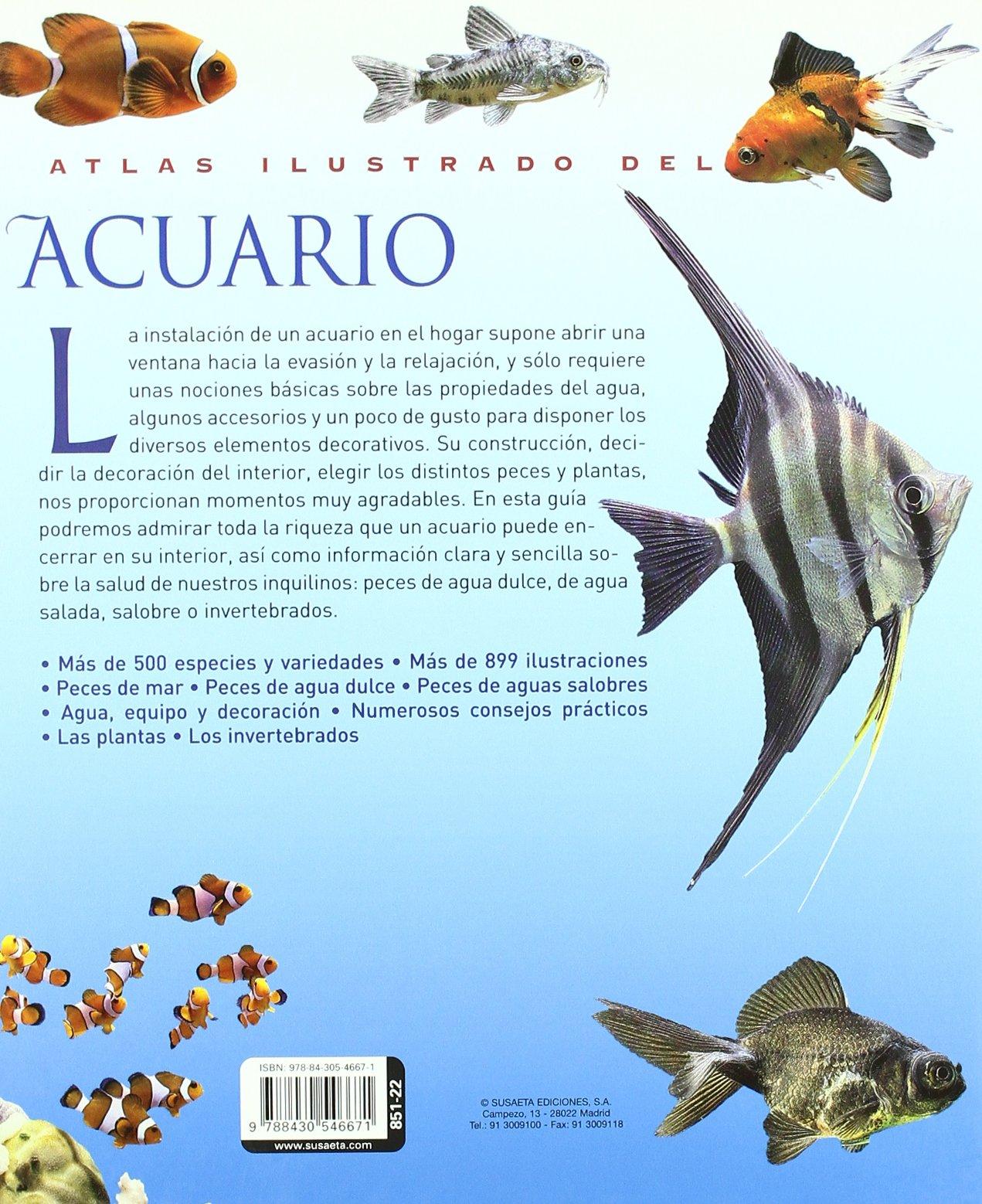 Acuario / Aquarius (Spanish Edition): Alain Breitenstein: 9788430546671: Amazon.com: Books