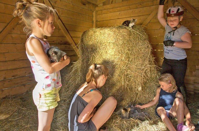 Pet's Pick Cedar Bedding, 5.0 cu ft for Dog Beds, Houses and Runs with MAXIMUM ODOR CONTROL + 100% GUARANTEE