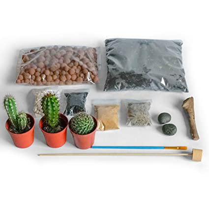 Concretelab Co Terrarium Diy Kit For Succulents And Cacti Plants