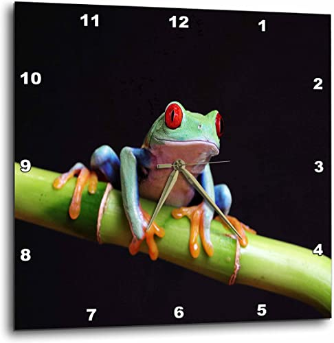 3dRose DPP_80758_3 Very Colorful Tropical Frog Closeup-Wall Clock, 15 by 15-Inch