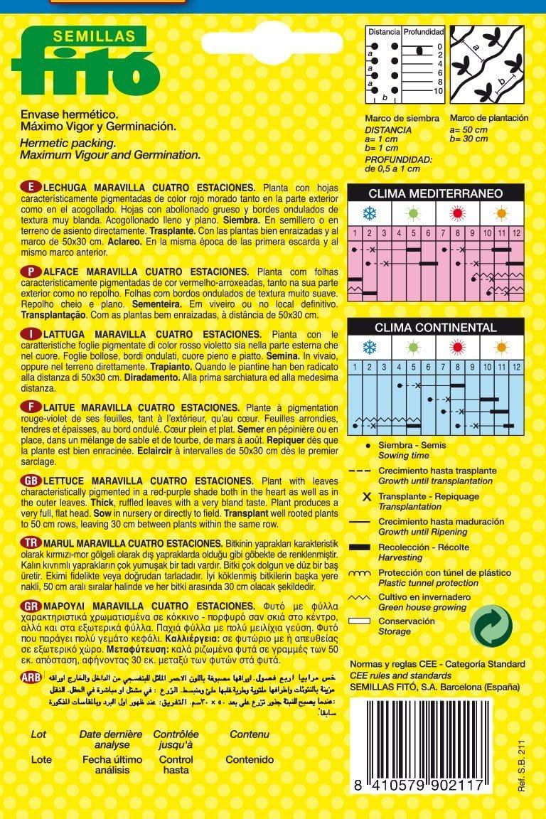 Semillas Fit/ó 211 Semillas de Lechuga Maravilla Cuatro Estaciones