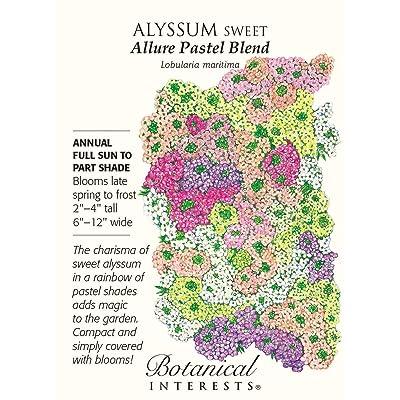 """Sweet Alyssum """"Allure Pastel Blend"""" Seeds : Alyssum Plants : Garden & Outdoor"""