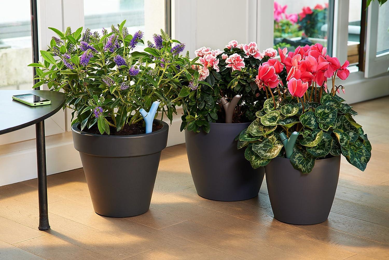 amazon com parrot flower power wireless indoor outdoor