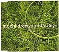 youthful days/Mr.Children