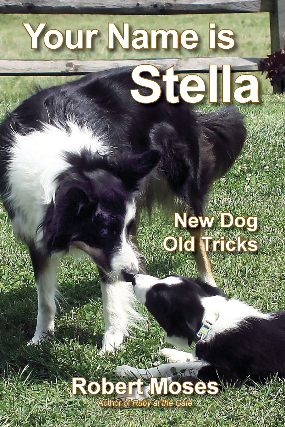 your-name-is-stella