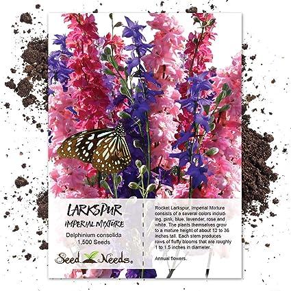 amazon com seed needs rocket larkspur imperial mixture