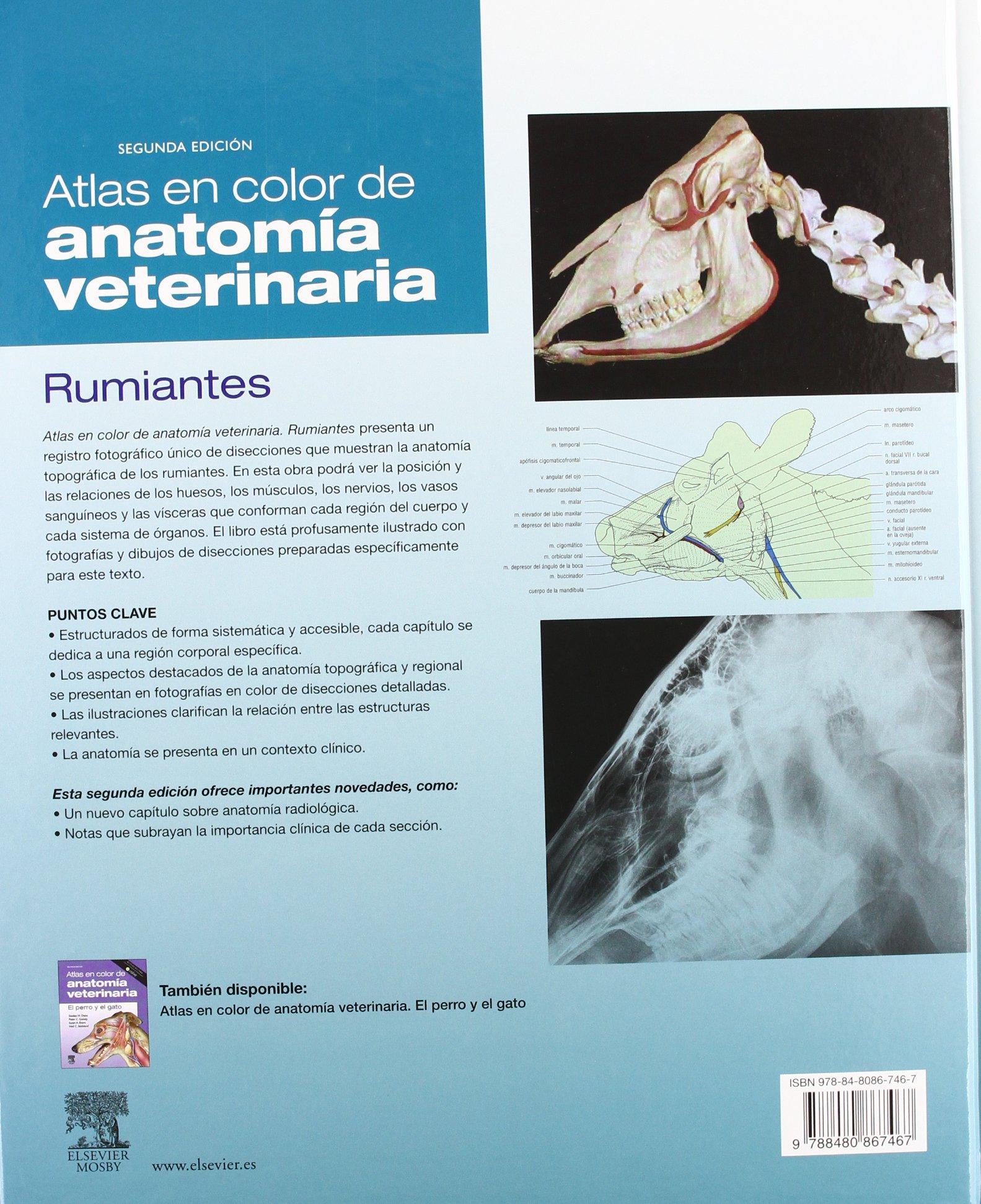 Atlas en color de anatomía veterinaria. Rumiantes: Amazon.es: R ...