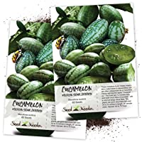 Seed Needs, Cucamelon/Mexican Sour Gherkin (Melothria scobra) Twin Pack of 65 Seeds Each