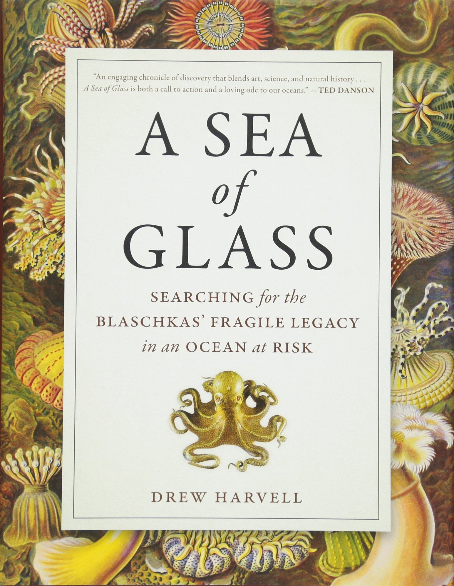 A Sea Of Glass: Searching For The Blaschkas' Fragile Legacy In An Ocean At