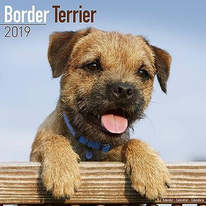 amazon com border terrier calendar 2019 dog breed calendar