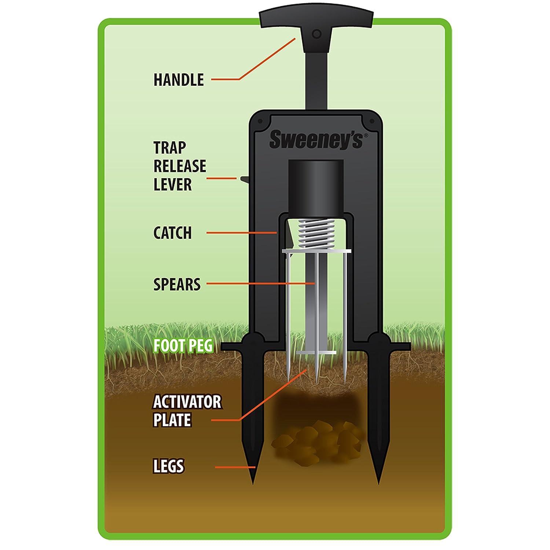 How to trap moles in your yard - Amazon Com Sweeney S S9015 Deadset Mole Trap Sweeney Mole Traps Patio Lawn Garden