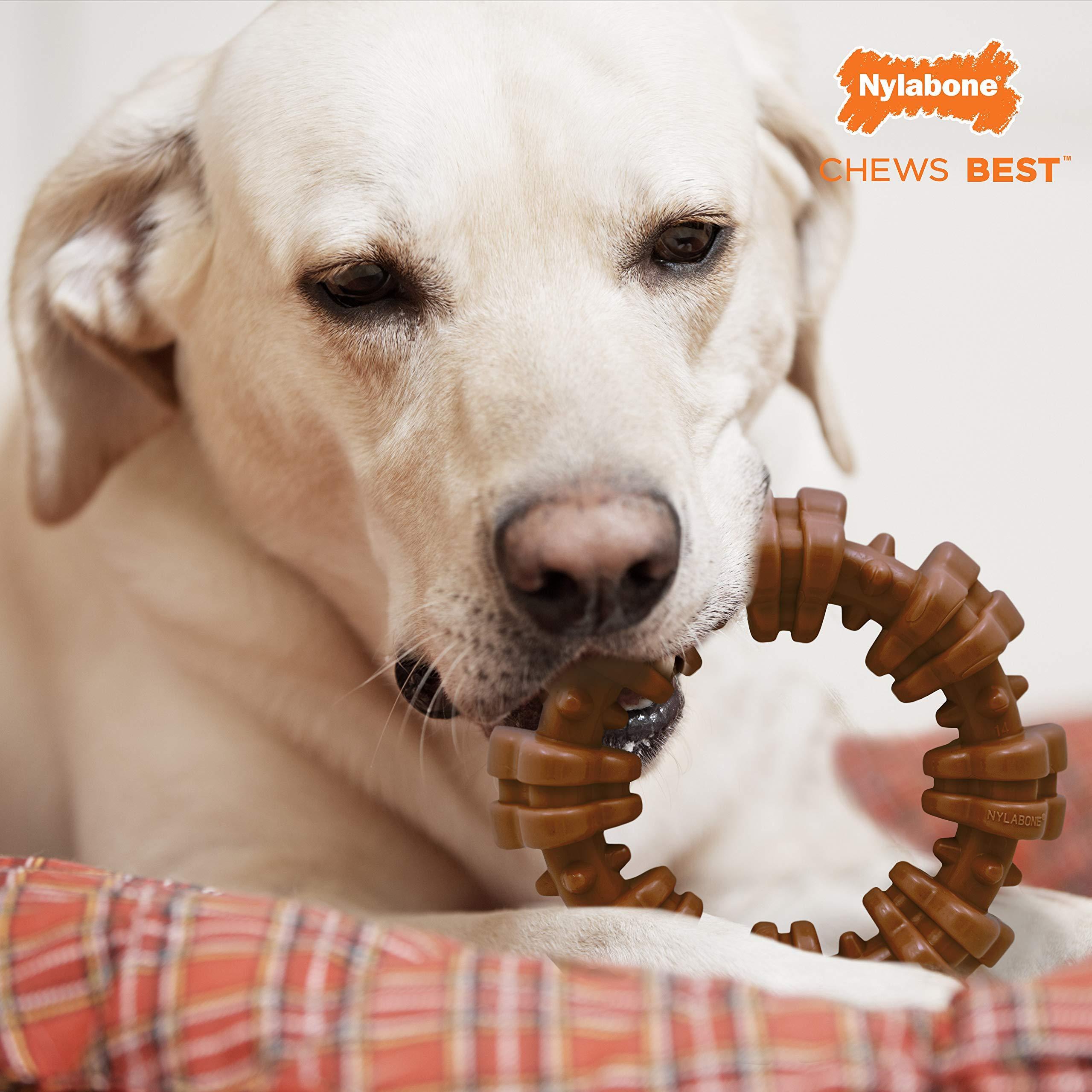 Large Dog Chew Toy Flavor Medley Nylabone Dura Chew Power Chew Textured Bone Souper