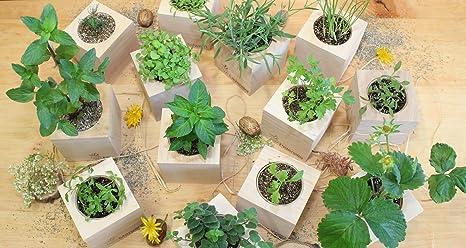 Feel Green Ecocube - Semillas de Fresa ecológicas, Idea de Regalo ...
