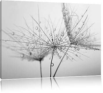Pusteblume bedeckt mit Tropfen Schwarz/Weiß, Format: 120x80 auf Leinwand,  XXL riesige Bilder fertig gerahmt mit Keilrahmen, Kunstdruck auf Wandbild  ...