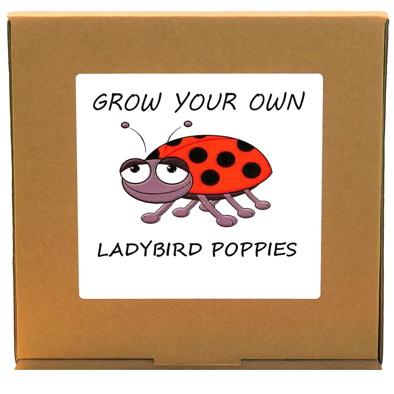 Grow Your Own Ladybird Poppy Plant Kit - Indoor/Windowsill Gardening GrowYourOwnPlants