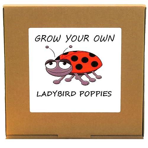 ... grow your own ladybird poppy plant kit unusual christmas gardening gardeners gift ...